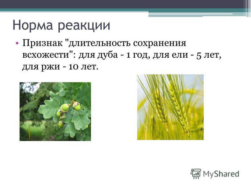 Норма реакции Признак длительность сохранения всхожести: для дуба - 1 год, для ели - 5 лет, для ржи - 10 лет.