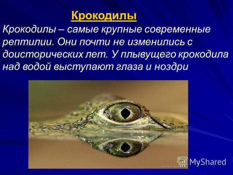 Крокодилы Крокодилы – самые крупные современные рептилии. Они почти не изменились с доисторических лет. У плывущего крокодила над водой выступают глаза и ноздри