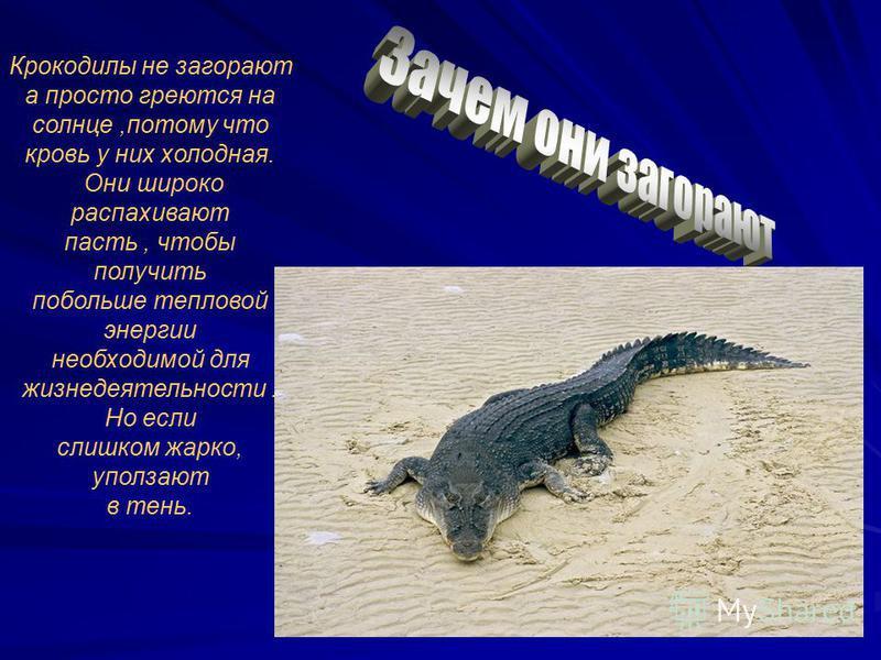 Крокодилы не загорают а просто греются на солнце,потому что кровь у них холодная. Они широко распахивают пасть, чтобы получить побольше тепловой энергии необходимой для жизнедеятельности. Но если слишком жарко, уползают в тень.