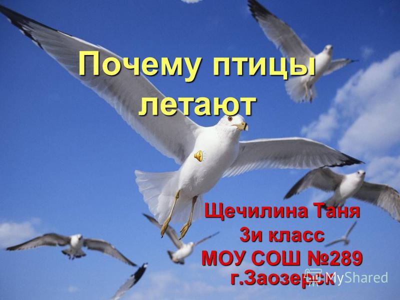 Почему птицы летают Щечилина Таня 3 и класс МОУ СОШ 289 г.Заозерск