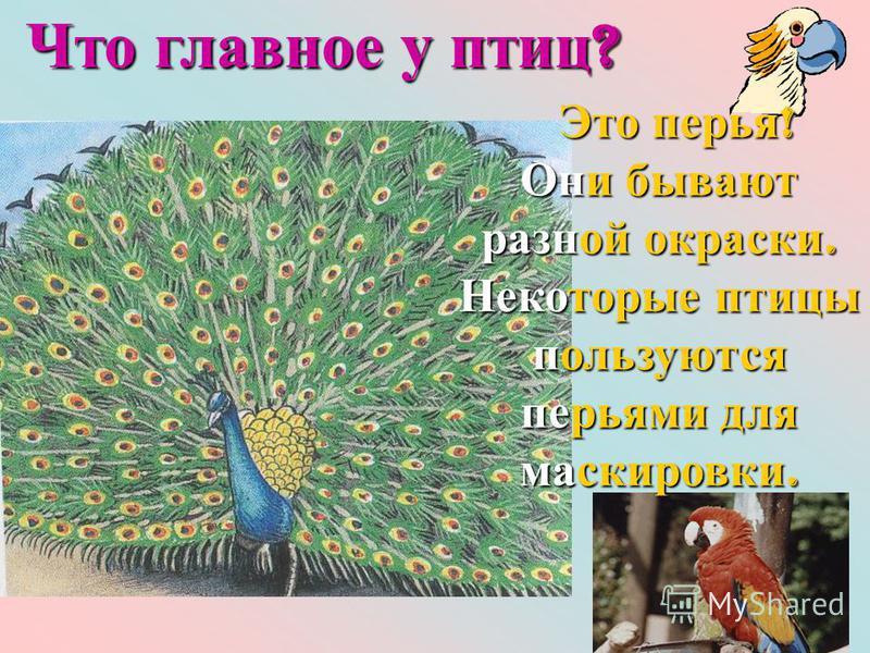 Это перья ! Это перья ! Они бывают разной окраски. Некоторые птицы пользуются перьями для маскировки. Что главное у птиц ?