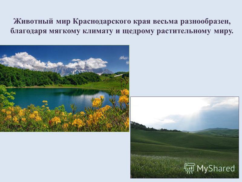 Животный мир Краснодарского края весьма разнообразен, благодаря мягкому климату и щедрому растительному миру.