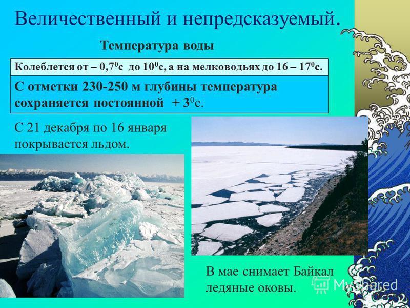 Большое содержание кремния в водах рек Б А Й К А Л Диатомовые водоросли поглощение Отмирая оседают на дно, образуя ил Диатомовые илы служат противоядием для агрессивной углекислоты. Рачки: эпишура байкальская, губки. Чистая вода Байкала