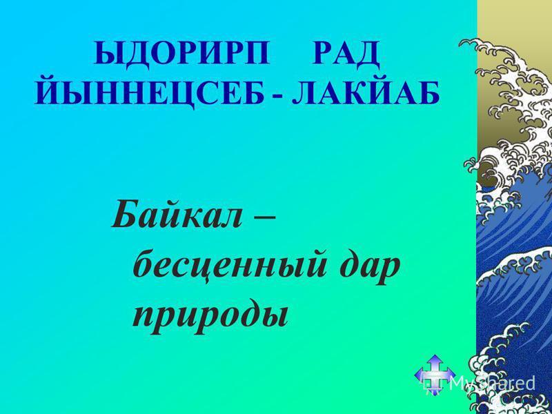 Укажите млекопитающее которое в отличии от своих сородичей прекрасно чувствует себя в пресных водах озера. Байкальская нерпа