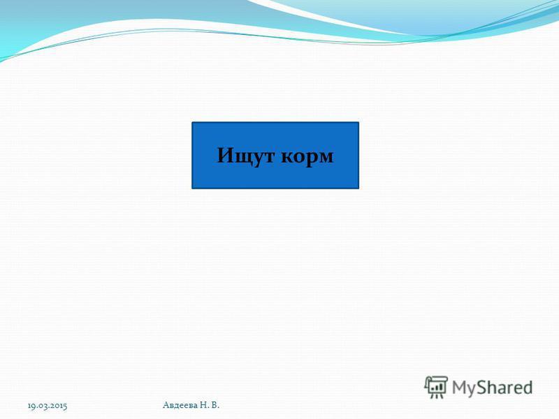 19.03.2015Авдеева Н. В. Ищут корм
