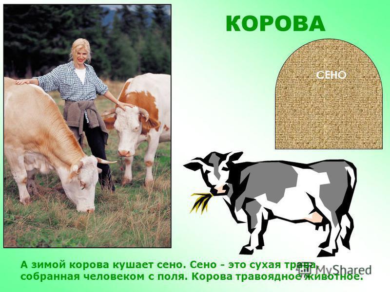 КОРОВА Корова очень полезное домашнее животное! Она дает человеку молоко, из которого он делает сливки, сметану, масло, творог, кефир и ряженку.