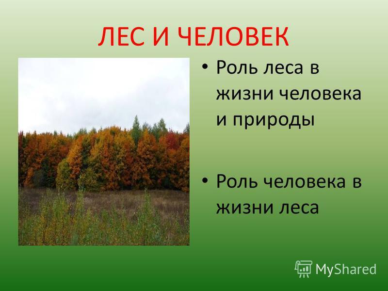 ЛЕС И ЧЕЛОВЕК Роль леса в жизни человека и природы Роль человека в жизни леса