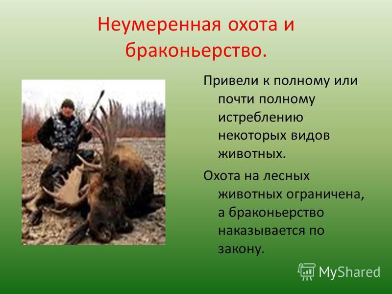 Неумеренная охота и браконьерство. Привели к полному или почти полному истреблению некоторых видов животных. Охота на лесных животных ограничена, а браконьерство наказывается по закону.