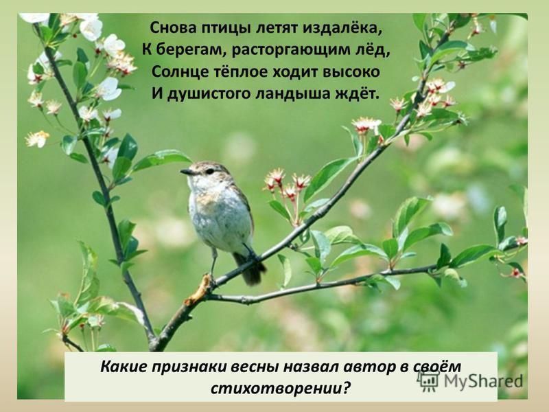 Снова птицы летят издалёка, К берегам, расторгающим лёд, Солнце тёплое ходит высоко И душистого ландыша ждёт. Какие признаки весны назвал автор в своём стихотворении?