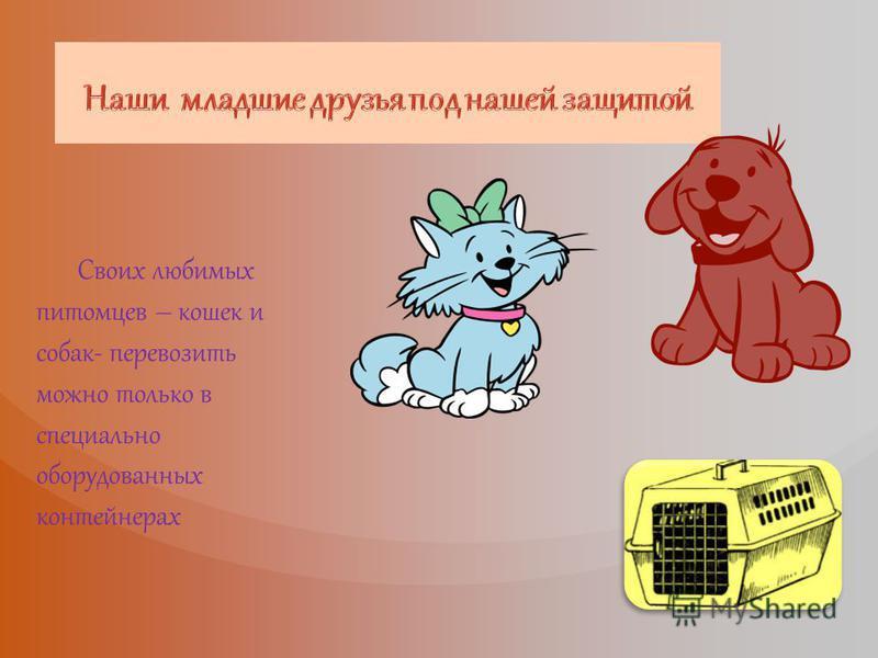 Своих любимых питомцев – кошек и собак- перевозить можно только в специально оборудованных контейнерах