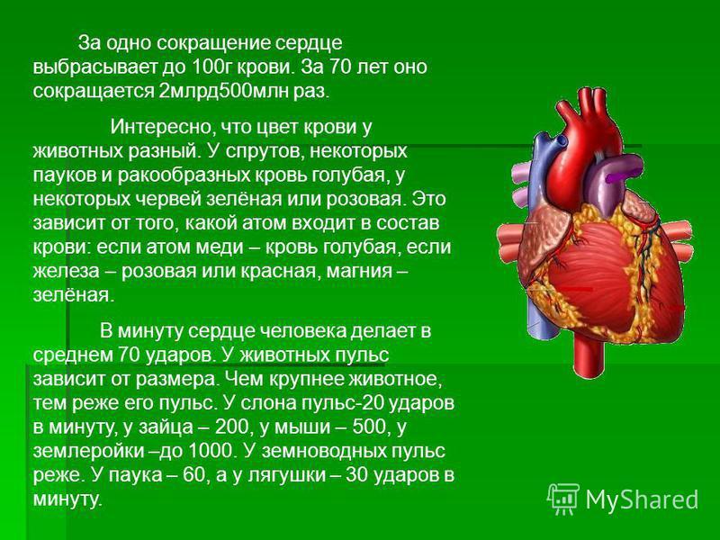 За одно сокращение сердце выбрасывает до 100 г крови. За 70 лет оно сокращается 2 млрд 500 млн раз. Интересно, что цвет крови у животных разный. У спрутов, некоторых пауков и ракообразных кровь голубая, у некоторых червей зелёная или розовая. Это зав