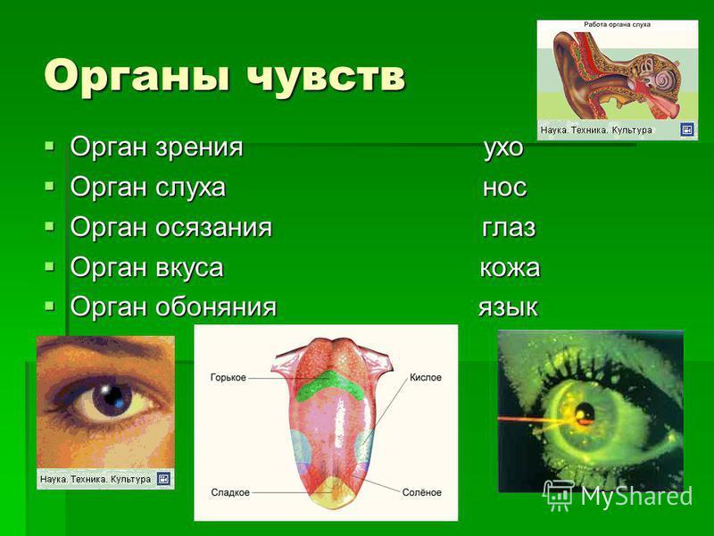 Органы чувств Орган зрения ухо Орган зрения ухо Орган слуха нос Орган слуха нос Орган осязания глаз Орган осязания глаз Орган вкуса кожа Орган вкуса кожа Орган обоняния язык Орган обоняния язык