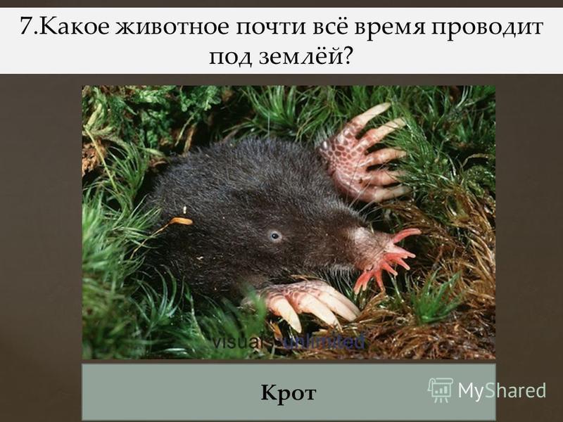 6. Какой гриб носит название лесного хищного зверя? Лисичка