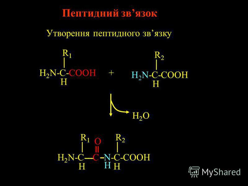 Протеїни: лінійні, гетерополімерні поліаміди Moномерні одиниці – aмінокислоти. Для складу протеїнів входять 20 різних амінокислот Кожний протеїн має унікальну, визначену довжину та послідовність залишків: Кожний протеїн характеризується унікальною 3D