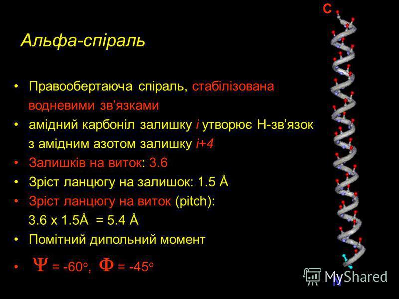 Обертання основного ланцюгу можливе тільки навколо зв язків, утворених альфа - вуглецевим атомом : обертання навколо C -N зв язку : обертання навколо C -C зв язку