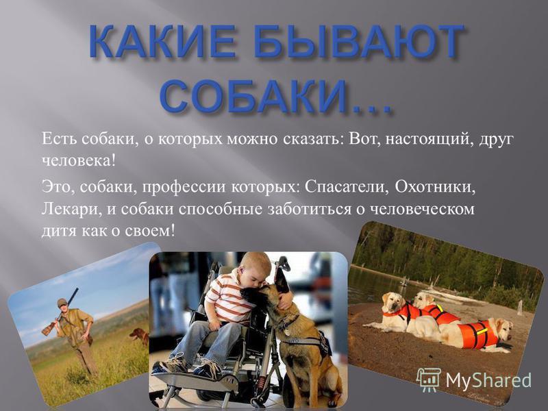 Есть собаки, о которых можно сказать : Вот, настоящий, друг человека ! Это, собаки, профессии которых : Спасатели, Охотники, Лекари, и собаки способные заботиться о человеческом дитя как о своем !