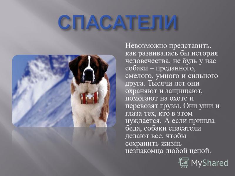 Невозможно представить, как развивалась бы история человечества, не будь у нас собаки – преданного, смелого, умного и сильного друга. Тысячи лет они охраняют и защищают, помогают на охоте и перевозят грузы. Они уши и глаза тех, кто в этом нуждается.