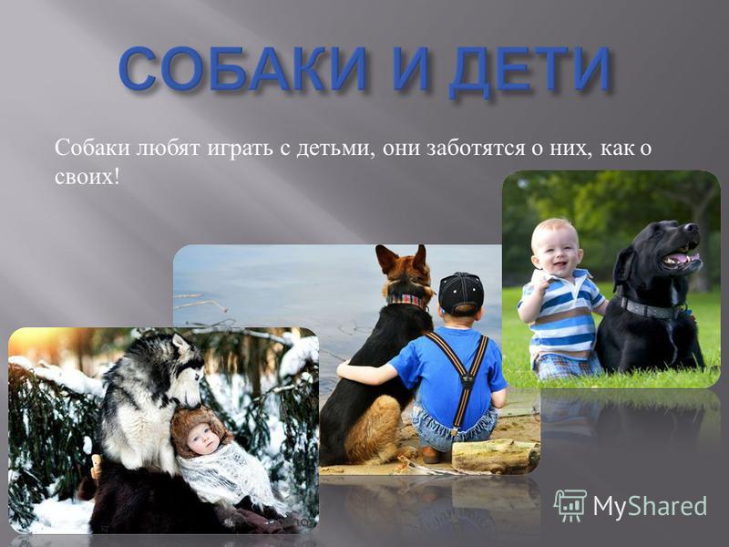 Собаки любят играть с детьми, они заботятся о них, как о своих !
