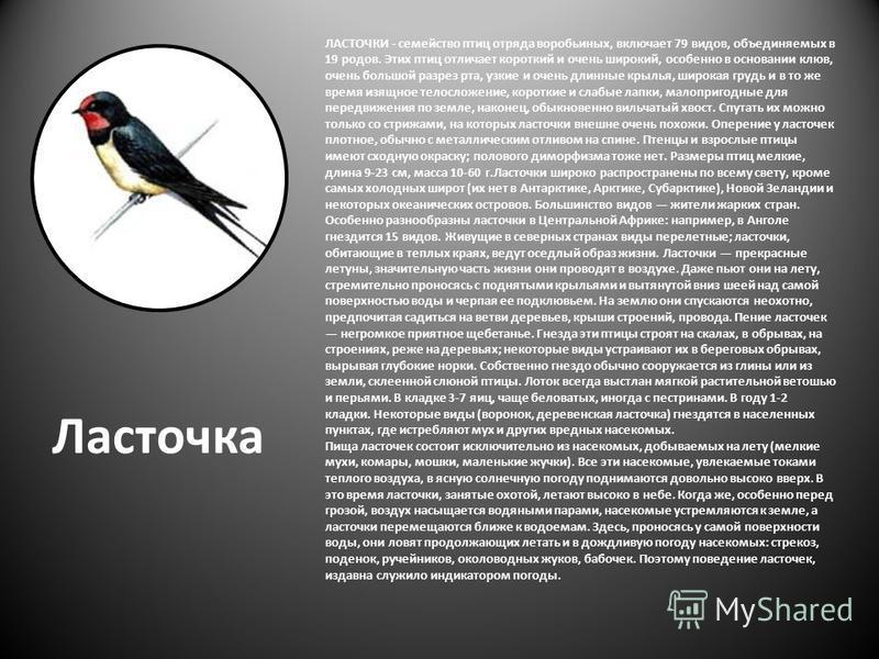 Ласточка ЛАСТОЧКИ - семейство птиц отряда воробьиных, включает 79 видов, объединяемых в 19 родов. Этих птиц отличает короткий и очень широкий, особенно в основании клюв, очень большой разрез рта, узкие и очень длинные крылья, широкая грудь и в то же