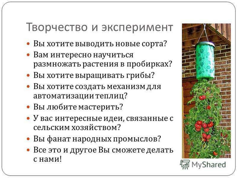 Творчество и эксперимент Вы хотите выводить новые сорта ? Вам интересно научиться размножать растения в пробирках ? Вы хотите выращивать грибы ? Вы хотите создать механизм для автоматизации теплиц ? Вы любите мастерить ? У вас интересные идеи, связан