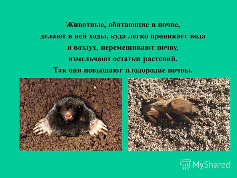 Животные, обитающие в почве, делают в ней ходы, куда легко проникает вода и воздух, перемешивают почву, измельчают остатки растений. Так они повышают плодородие почвы.