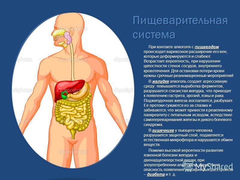 Пищеварительная система При контакте алкоголя с пищеводом происходит варикозное расширение его вен, которые деформируются и слабеют. Возрастает вероятность, при нарушении целостности стенок сосудов, внутреннего кровотечения. Для остановки потери кров