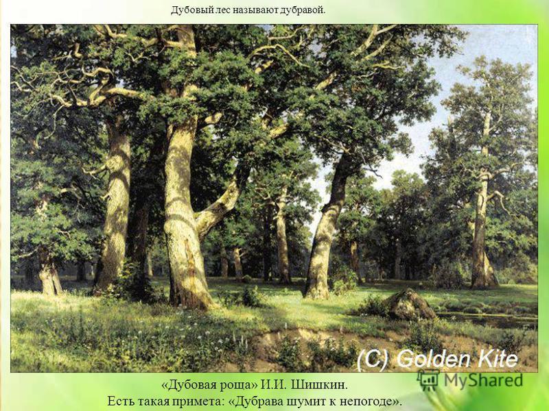 Дубовый лес называют дубравой. «Дубовая роща» И.И. Шишкин. Есть такая примета: «Дубрава шумит к непогоде».