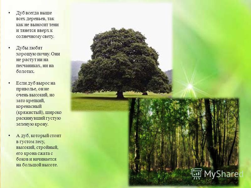 Дуб всегда выше всех деревьев, так как не выносит тени и тянется вверх к солнечному свету. Дубы любят хорошую почву. Они не растут ни на песчаниках, ни на болотах. Если дуб вырос на приволье, он не очень высокий, но зато крепкий, коренастый (кряжисты