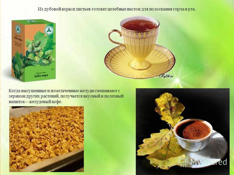 Из дубовой коры и листьев готовят целебные настои для полоскания горла и рта. Когда высушенные и измельченные желуди смешивают с зернами других растений, получается вкусный и полезный напиток – желудевый кофе.