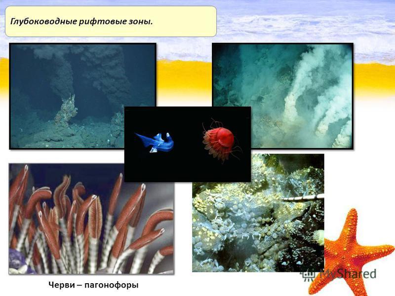 Глубоководные рифтовые зоны. Черви – погонофоры