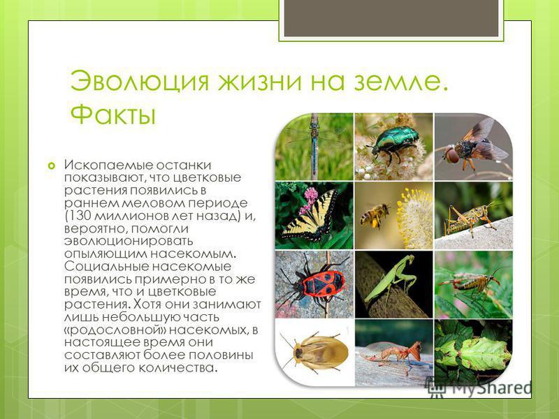 Эволюция жизни на земле. Факты Ископаемые останки показывают, что цветковые растения появились в раннем меловом периоде (130 миллионов лет назад) и, вероятно, помогли эволюционировать опыляющим насекомым. Социальные насекомые появились примерно в то