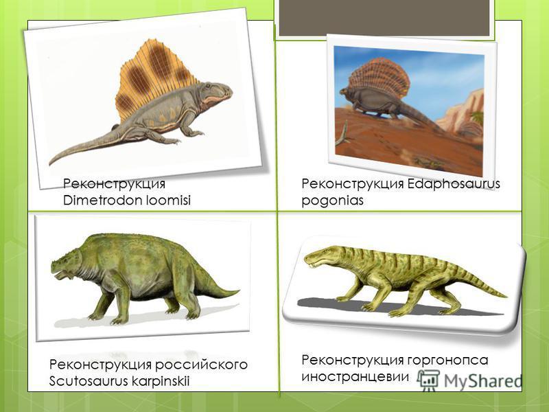 Реконструкция Dimetrodon loomisi Реконструкция Edaphosaurus pogonias Реконструкция российского Scutosaurus karpinskii Реконструкция горгонопса иностранцевии