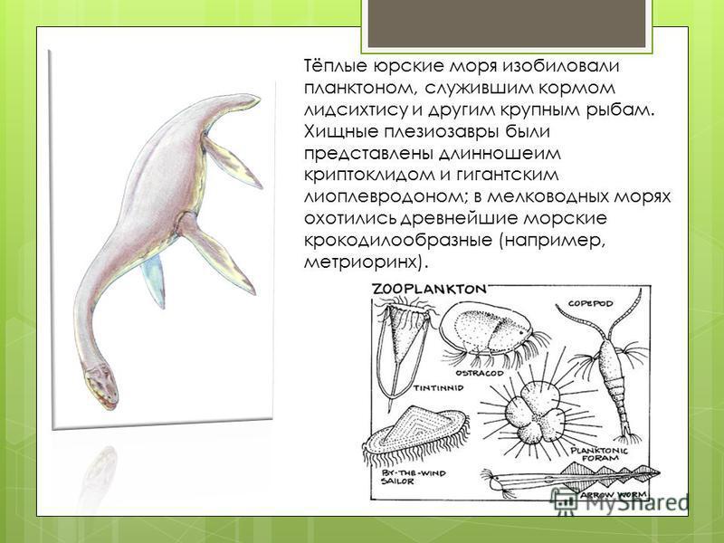 Тёплые юрские моря изобиловали планктоном, служившим кормом лидсихтису и другим крупным рыбам. Хищные плезиозавры были представлены длинношеим криптоклидом и гигантским лиоплевродоном; в мелководных морях охотились древнейшие морские крокодилообразны