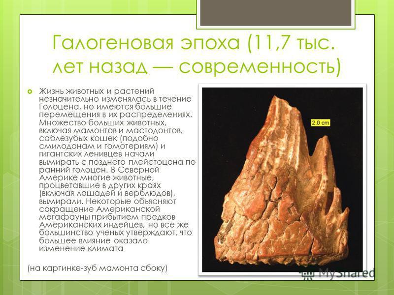 Галогеновая эпоха (11,7 тыс. лет назад современность) Жизнь животных и растений незначительно изменялась в течение Голоцена, но имеются большие перемещения в их распределениях. Множество больших животных, включая мамонтов и мастодонтов, саблезубых ко