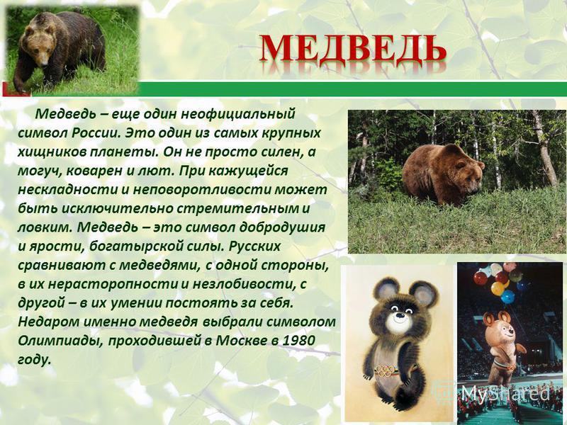 Медведь – еще один неофициальный символ России. Это один из самых крупных хищников планеты. Он не просто силен, а могуч, коварен и лют. При кажущейся нескладности и неповоротливости может быть исключительно стремительным и ловким. Медведь – это симво