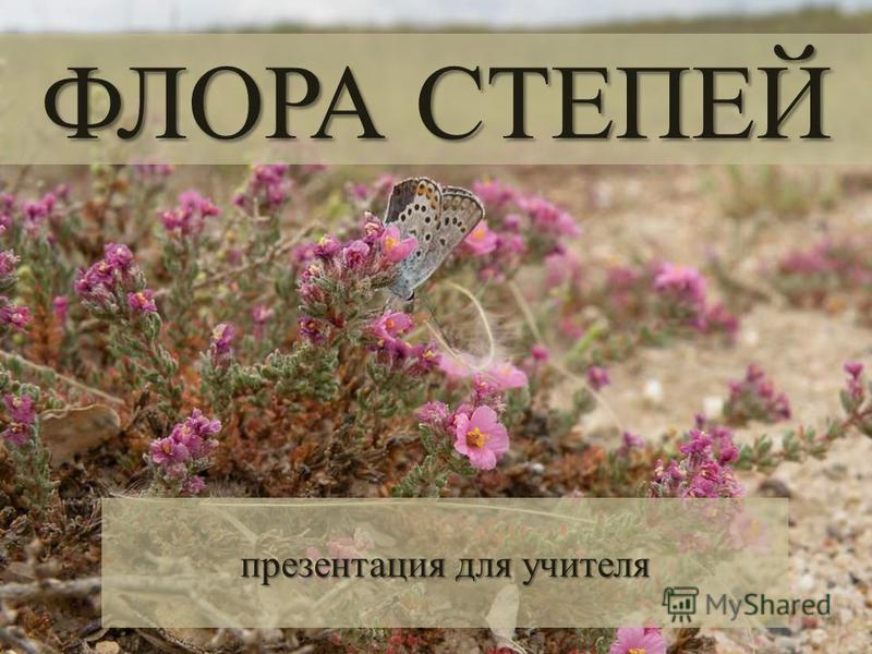 ФЛОРА СТЕПЕЙ презентация для учителя