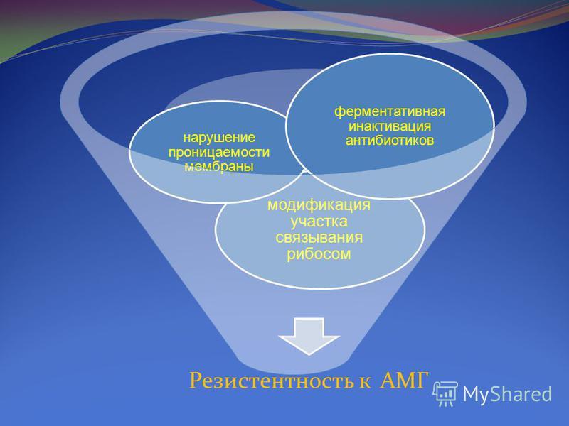 Резистентность к АМГ модификация участка связывания рибосом нарушение проницаемости мембраны ферментативная инактивация антибиотиков