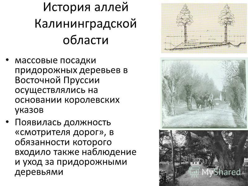 История аллей Калининградской области массовые посадки придорожных деревьев в Восточной Пруссии осуществлялись на основании королевских указов Появилась должность «смотрителя дорог», в обязанности которого входило также наблюдение и уход за придорожн