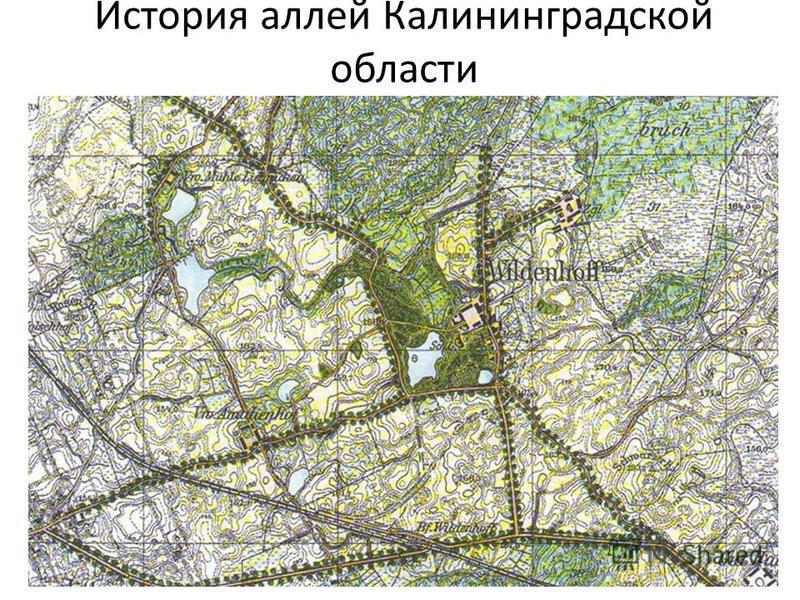 История аллей Калининградской области