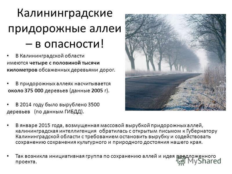 Калининградские придорожные аллеи – в опасности! В Калининградской области имеются четыре с половиной тысячи километров обсаженных деревьями дорог. В придорожных аллеях насчитывается около 375 000 деревьев (данные 2005 г). В 2014 году было вырублено