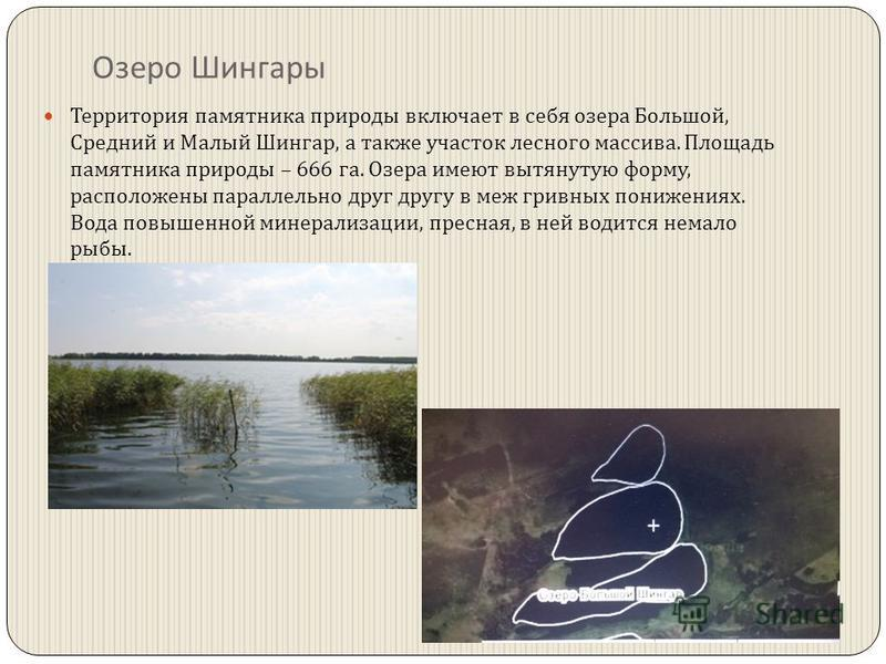 Озеро Шингары Территория памятника природы включает в себя озера Большой, Средний и Малый Шингар, а также участок лесного массива. Площадь памятника природы – 666 га. Озера имеют вытянутую форму, расположены параллельно друг другу в меж гривных пониж