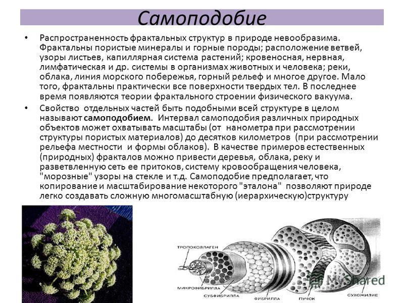 Самоподобие Распространенность фрактальных структур в природе невообразима. Фрактальны пористые минералы и горные породы; расположение ветвей, узоры листьев, капиллярная система растений; кровеносная, нервная, лимфатическая и др. системы в организмах