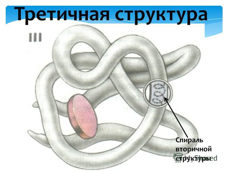 Третичная структура Спираль вторичной структуры