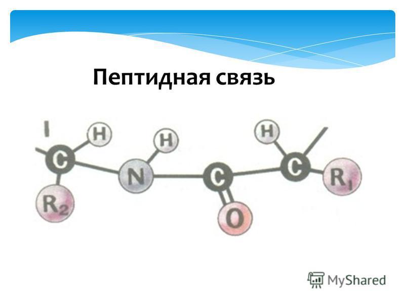 Пептидная связь