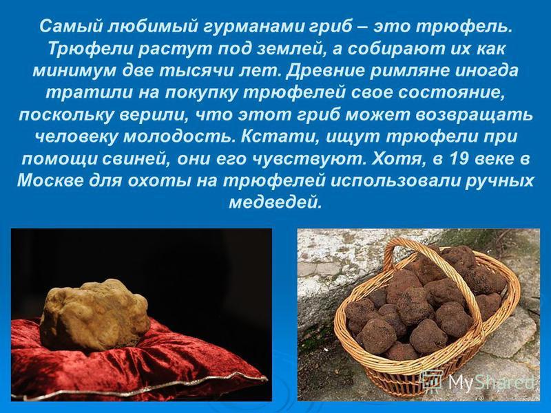 Самый любимый гурманами гриб – это трюфель. Трюфели растут под землей, а собирают их как минимум две тысячи лет. Древние римляне иногда тратили на покупку трюфелей свое состояние, поскольку верили, что этот гриб может возвращать человеку молодость. К