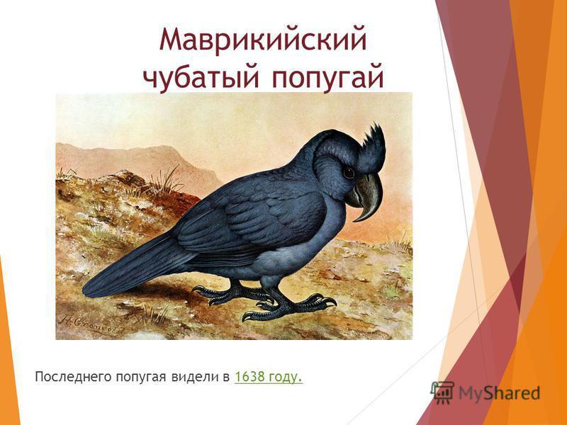 Последнего попугая видели в 1638 году. Маврикийский чубатый попугай