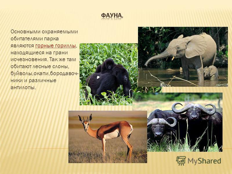 Основными охраняемыми обитателями парка являются горные гориллы, находящиеся на грани исчезновения. Так же там обитают лесные слоны, буйволы,окапи,бородавочник и и различные антилопы.горные гориллы