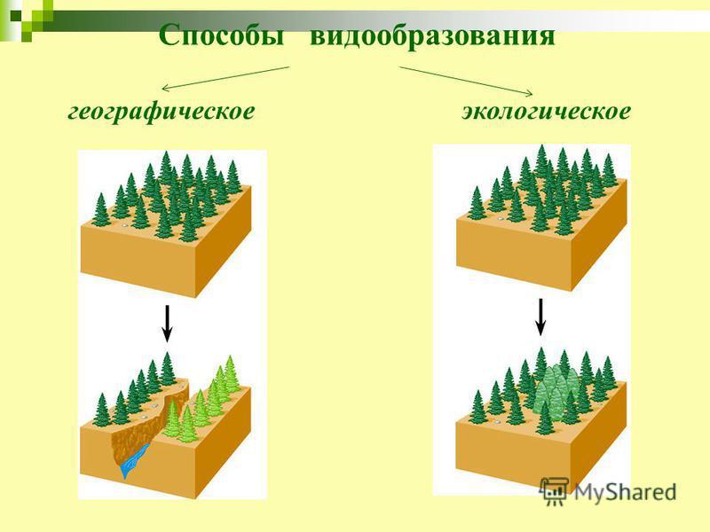 Способы видообразования географическое экологическое