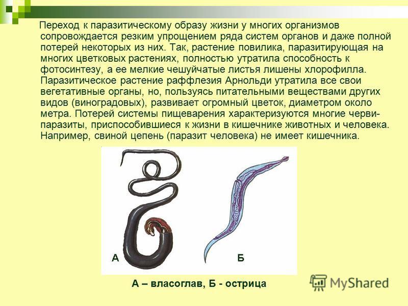 Переход к паразитическому образу жизни у многих организмов сопровождается резким упрощением ряда систем органов и даже полной потерей некоторых из них. Так, растение повилика, паразитирующая на многих цветковых растениях, полностью утратила способнос