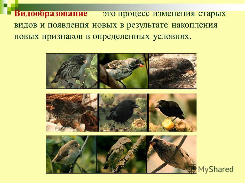 Видообразование это процесс изменения старых видов и появления новых в результате накопления новых признаков в определенных условиях.